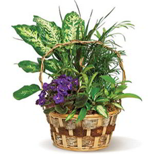 Basking Ridge Florist | Pretty Basket