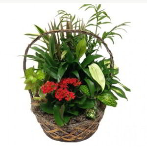 Basking Ridge Florist | Indoor Garden